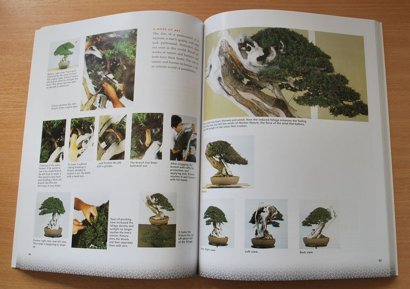 The Magician: The Bonsai Art of Kimura 2